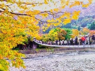 紅葉を見ながら長い吊り橋を渡る大勢の観光客の写真・画像素材[4004108]