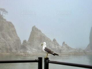 海辺のフェンスにとまっている一羽のカモメの写真・画像素材[4004133]