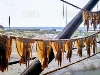 日本海を背に一例に並ぶイカを干し物の写真・画像素材[4004195]