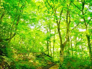 新緑の森の中にある小径の階段の写真・画像素材[4414093]
