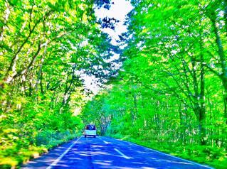 新緑の中の道路を走る自動車の写真・画像素材[4414461]