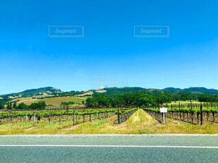 背景にワイナリーのある直線道路の写真・画像素材[4609282]