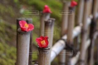 花の側面に座っている消火栓の写真・画像素材[3806913]
