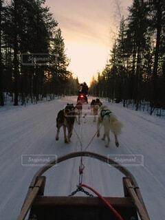犬,自然,風景,冬,雪,運動,神秘,フィンランド,ウィンタースポーツ,犬のそり