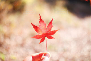 秋の葉の写真・画像素材[3807089]