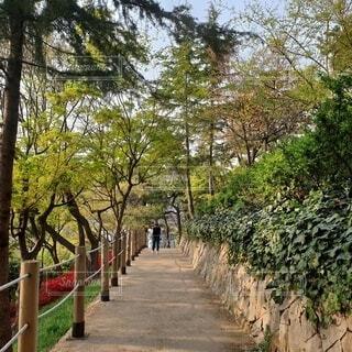 並木道を散歩する女の子の写真・画像素材[3903694]