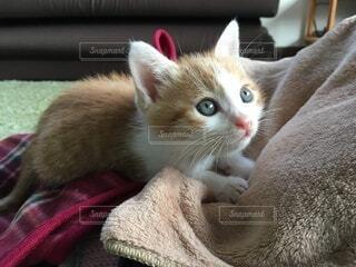 夢見る子猫の写真・画像素材[3813971]