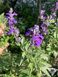 庭に咲いてた花の写真・画像素材[3812826]