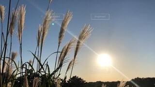 秋晴の空とすすきの写真・画像素材[3817437]