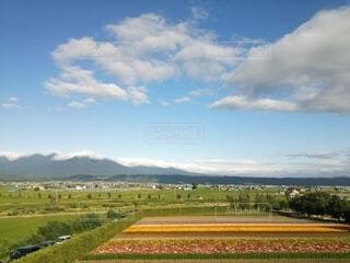 お花畑と夏空の写真・画像素材[3816697]