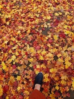 紅葉と落葉と…の写真・画像素材[3833410]
