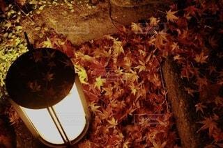 夜の紅葉の写真・画像素材[3815340]