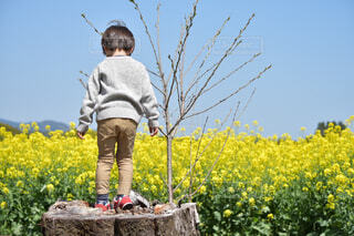 男の子の後ろ姿の写真・画像素材[4303612]