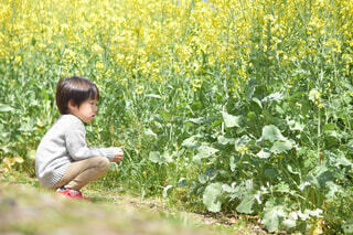 菜の花畑に座っている男の子の写真・画像素材[4303613]