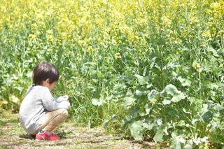 菜の花畑に座っている男の子の写真・画像素材[4303606]