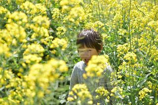 花の中にいる男の子の写真・画像素材[4303611]