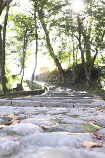 森の中を木漏れ日へ歩くの写真・画像素材[3820995]