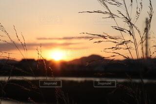 秋の街並みに沈む夕日の写真・画像素材[3823133]