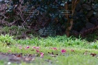 草と花と木と森との写真・画像素材[3829078]