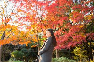 自然,秋,紅葉,もみじ,代々木公園,インスタ映え