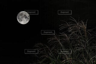 自然,風景,空,夜景,月,満月
