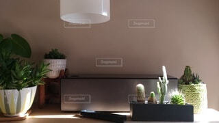 スピーカーと植物の写真・画像素材[3919053]
