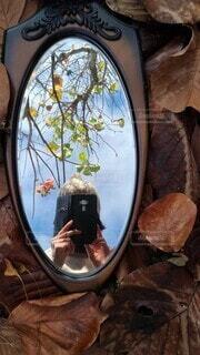 秋の中の写真・画像素材[3932348]