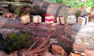 倒木の上のプレゼントの写真・画像素材[3981075]