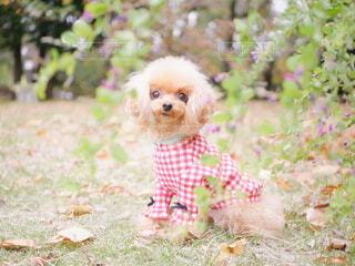 草の中に座っている犬の写真・画像素材[3918911]