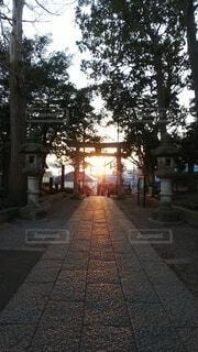 空,朝日,神社,樹木,道,正月,歩道,お正月,日の出,明るい,新年,初日の出,光の道