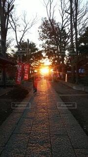空,朝日,神社,樹木,道,正月,歩道,お正月,日の出,新年,初日の出,光の道