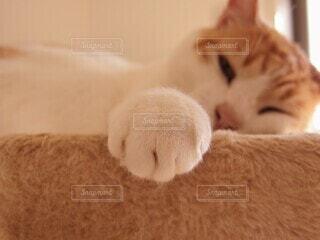 愛猫とグータッチの写真・画像素材[3989930]