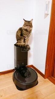 カウンターに座っている猫の写真・画像素材[3989857]