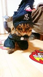 テーブルの上に座っている帽子をかぶった猫の写真・画像素材[4116955]