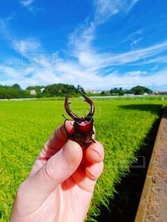 緑の畑を持つ手の写真・画像素材[4756008]