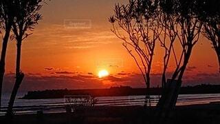 自然,風景,空,太陽,朝日,ビーチ,水面,樹木,日の出