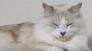 横になってカメラを見ている猫の写真・画像素材[3841252]
