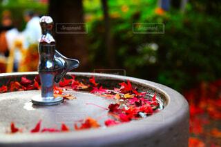 紅葉が落ちた飲む水道水の写真・画像素材[3836331]