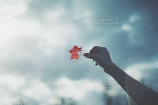 空に映えるもみじの写真・画像素材[3847172]