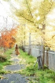 秋色の散歩道の写真・画像素材[3917795]