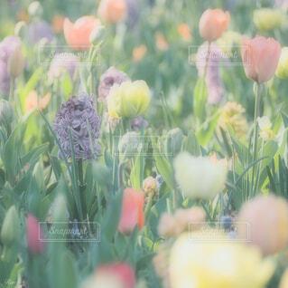 春に見た淡い色の花の写真・画像素材[4278725]