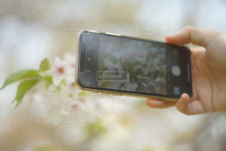 カメラに映る桜の花の写真・画像素材[4278731]