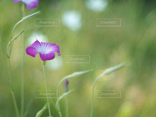 野に咲く花の写真・画像素材[4313832]
