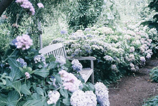 紫陽花の咲くガーデンの写真・画像素材[4355077]