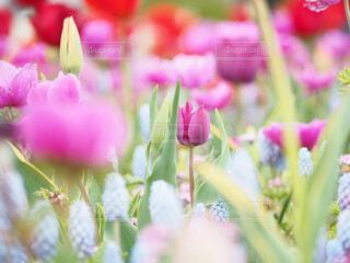 お花いっぱいの庭!の写真・画像素材[4355739]