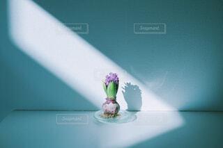 朝日を浴びる花の写真・画像素材[4462325]