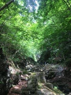 川苔山 登山の写真・画像素材[3841216]