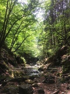川苔山 登山の写真・画像素材[3841229]