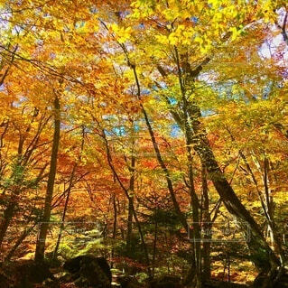 高原山 滝巡り 紅葉 ハイキング 登山の写真・画像素材[3862967]