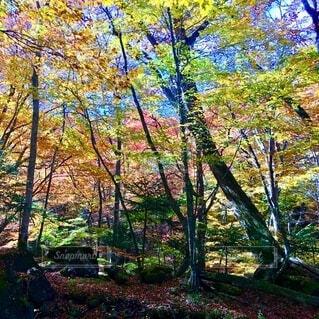 高原山 滝巡り 紅葉 ハイキングの写真・画像素材[3862970]